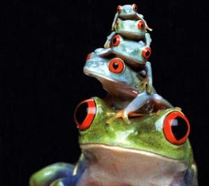 La rana sorda.rafaelferrer.es